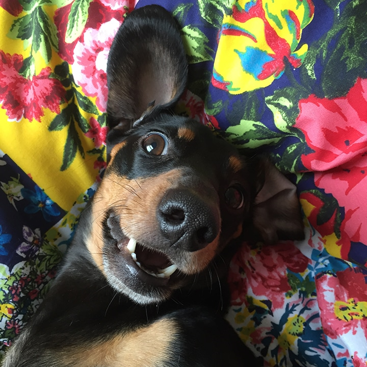 L'arte del selfie a quattro zampe