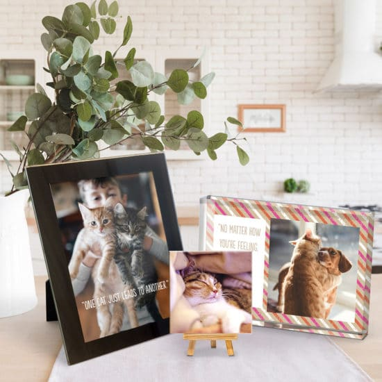 Create custom table top displays of your pet photos