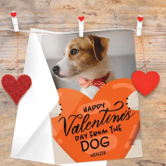 Create Valentines Day cards from the pet