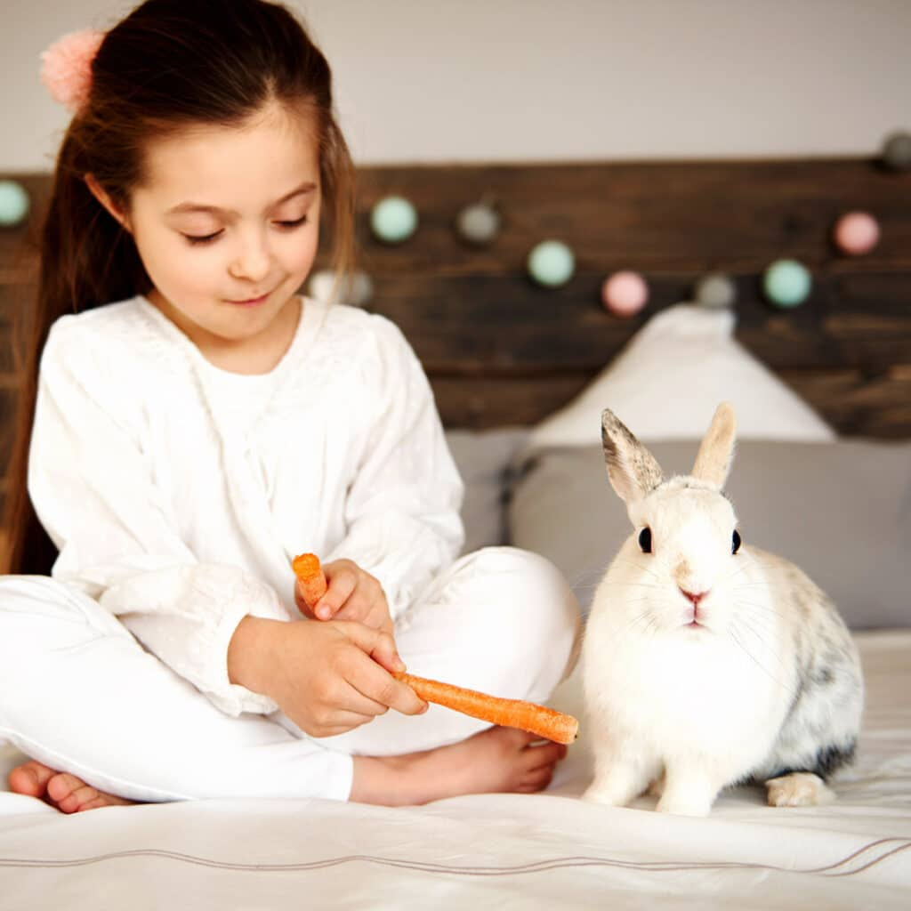 Little girl sitting on a bed next to her pet rabbit feeding him with a carrot.